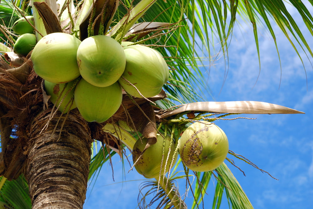 Coconuts and water filters