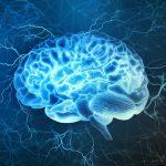 WFA-brain blog